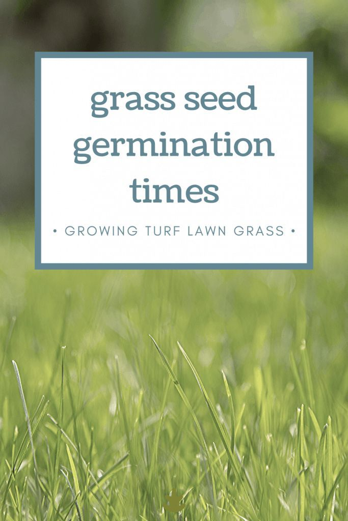 How Long Does It Take For Grass Seed To Germinate Grass Seed Types Best Grass Seed Grass For Shady Areas