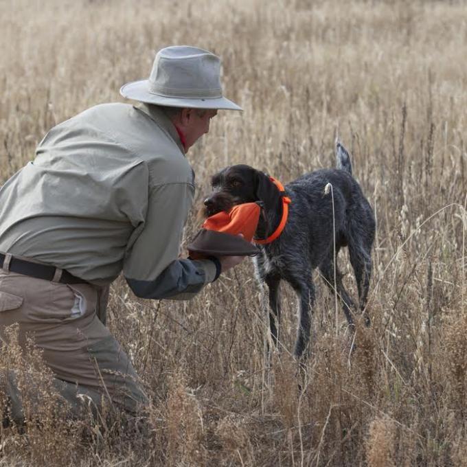 sporting dogs labrador retrievers birds of prey and - 680×680