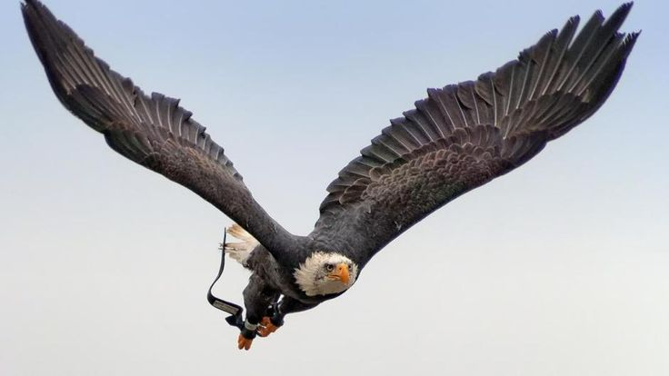 adler-flug-olympus-teleaufnahme-adler-flug-940.jpg (940×529)