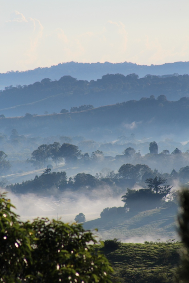 Misty morning in the hinterland Home - Lismore, NSW