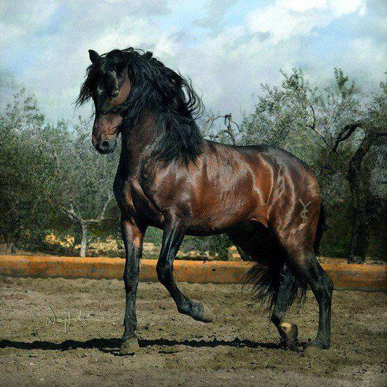 Fotos de caballos - VII - http://www.elmundodelcaballo.com/caballos/fotos-y-videos/fotos-de-caballos-vii/