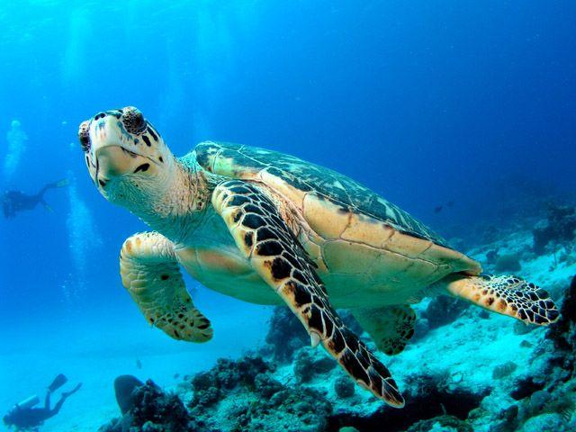 Taken by Melina Beach Turtle Hatchery, Pulau Tioman. #sea turtles