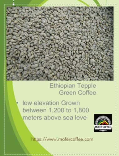 Ethiopian Tepple Green Coffee