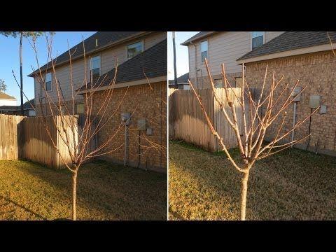 ▶ How to Prune Fruit Trees: Avocado, Apple, Nectarine, Plum, Pomegranate, Pear, Cherry, Fig - YouTube