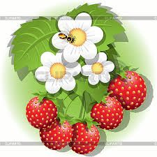 Risultati immagini per цветок клубники