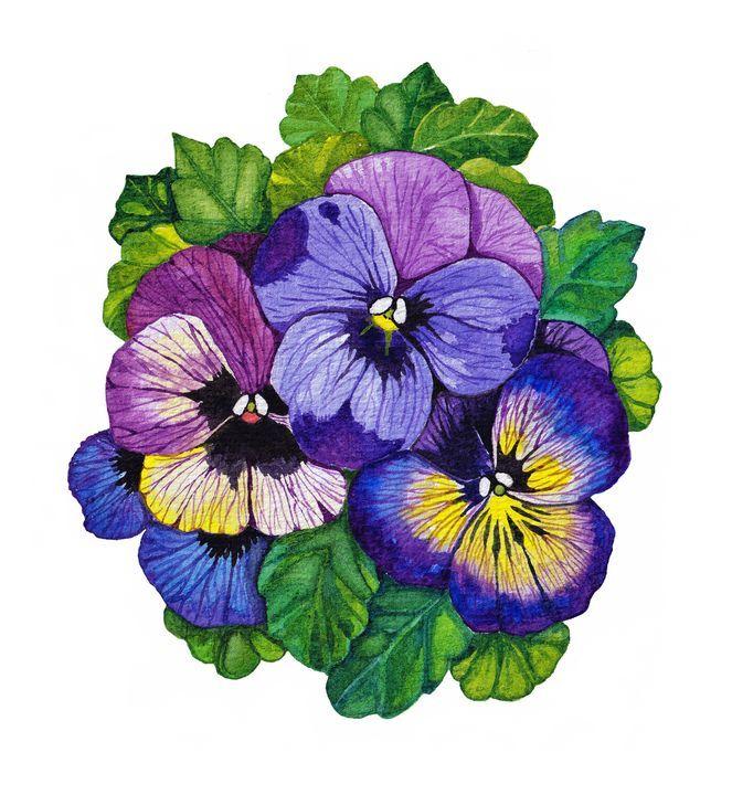 Pansy Flowers In Watercolor Oirabot Flower Drawing Pansies Flowers Pansies Art