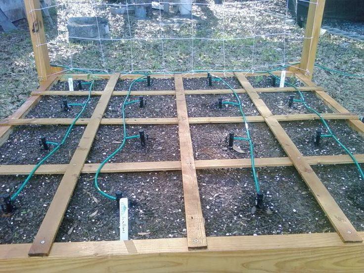 drip irrigation - Drip Irragation in SFG