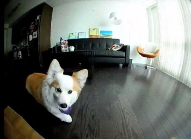 Τι κάνει ο σκύλος μόνος του στο σπίτι; Την απορία λύνει το PetBot [Video]