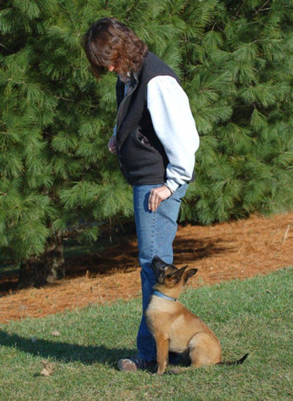 Leerburg S Basic Dog Obedience Training Dvd Dog Training Puppy
