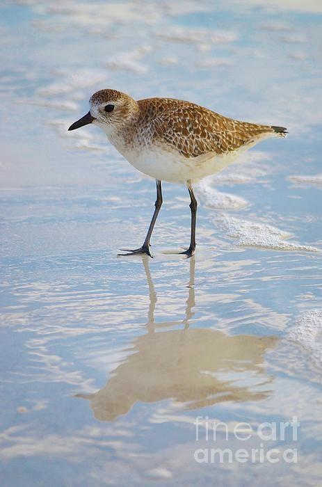 Sandpiper Reflection