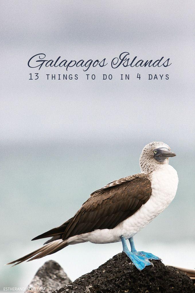 13 cosas que hacer en las Islas Galápagos