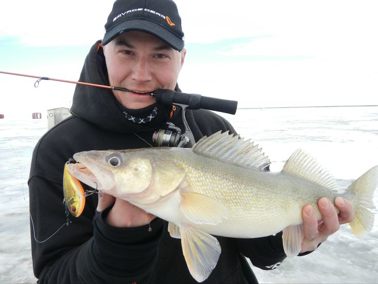 Walleye on the Fat Vibe