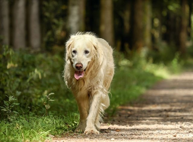 8 Changes To Expect As Your Dog Becomes A Senior Dogs Dog