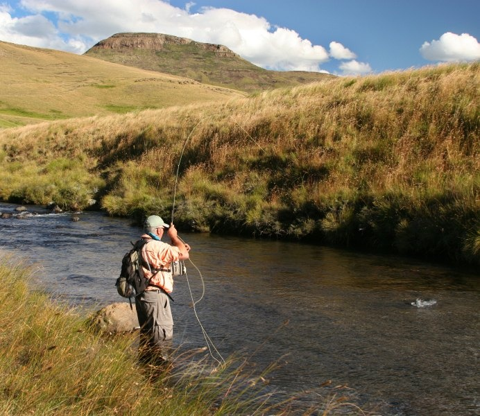 Trout from the Upper Bokspruit   Tomsutcliffe.co.za