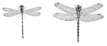 libelle tekening - Google zoeken