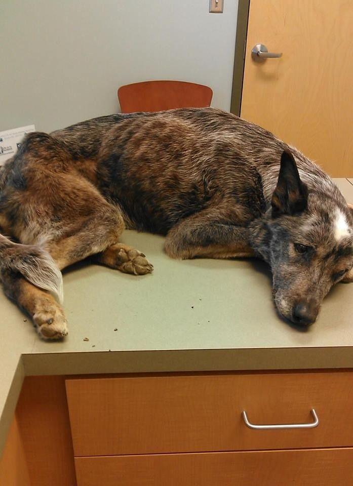 Tuscaloosa Dog Rescue Red
