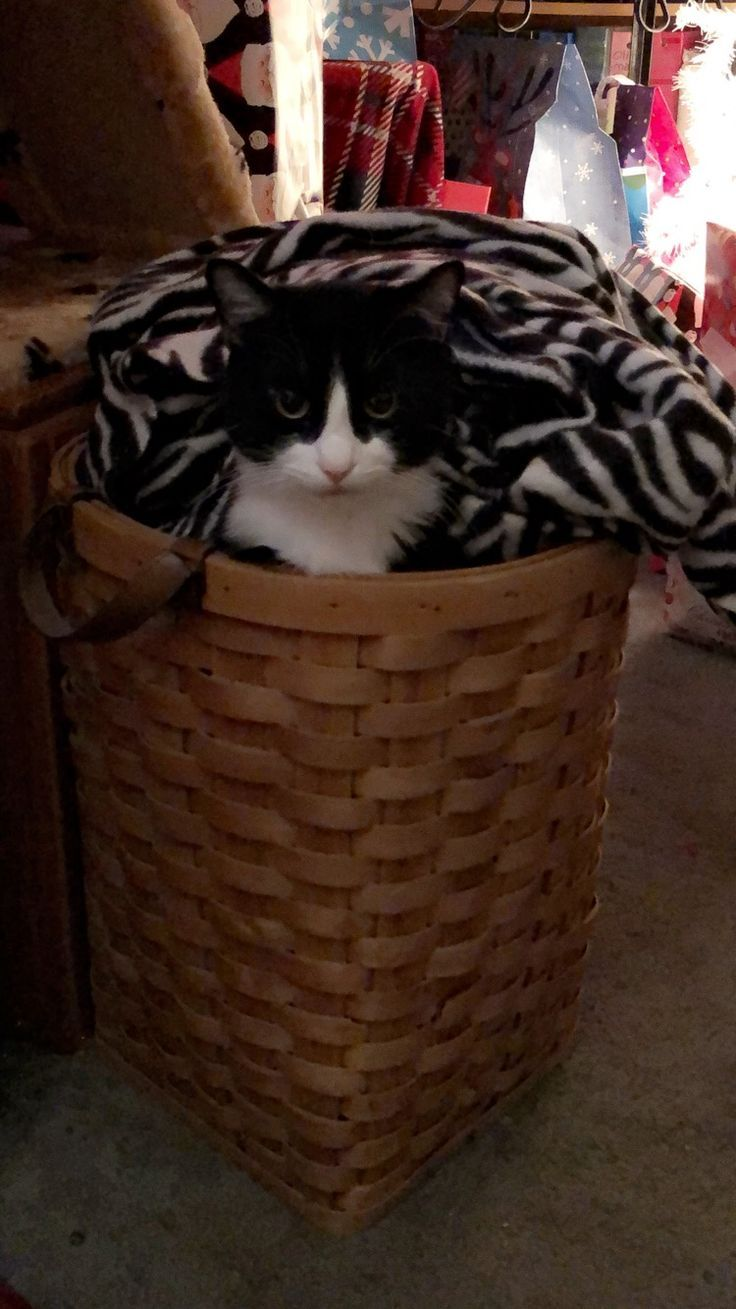 Pin on Cats in their Boxes, Bags, Buckets & Silly Places!