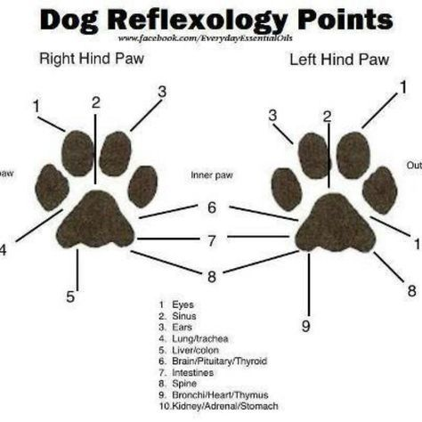 Doterra for dog's. Learn how to heal your pet naturally with Essential oils that have been around for thousands of years. Shop and learn more at mydoterra.com/metcalf