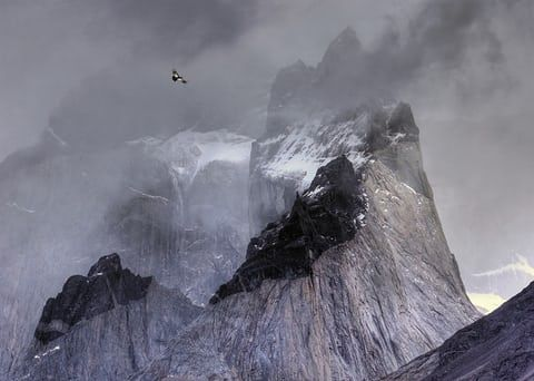 Andean condor in flight over mountain peaks by Ben Hall, UK