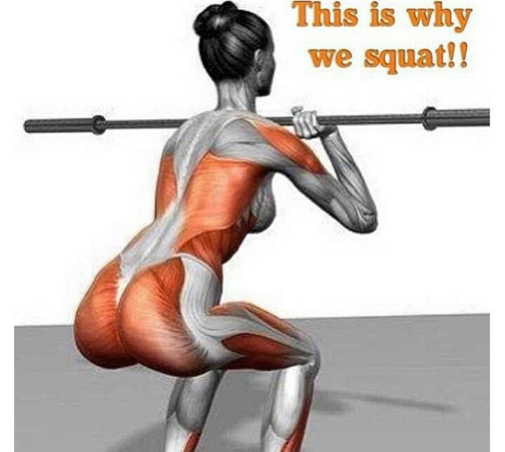 What muscles do squats workout? Check out this photo.