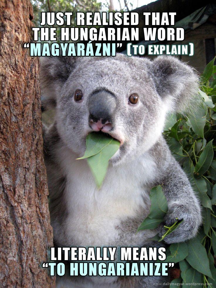 magyar [ˈmɑɟɑr] – Hungarian magyarázni [ˈmɑɟɑraːzni] – to explain https://dailymagyar.wordpress.com/2014/04/19/magyarazni/ #Hungarian #meme #magyar