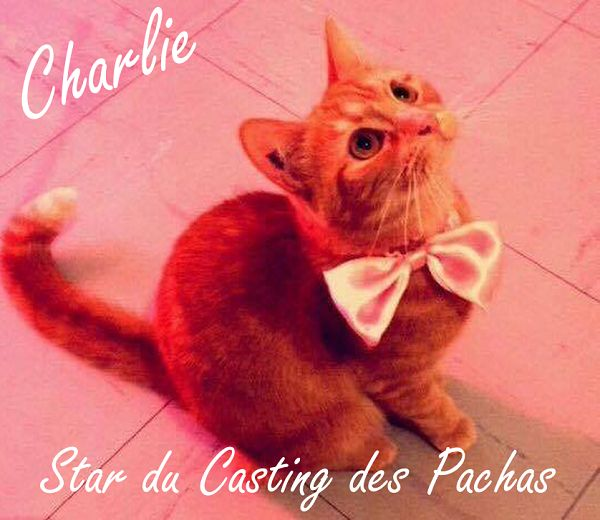 ❤ Casting des Pachas ❤ Merci à tous les Pachas pour ce fantastique Casting. Les internautes ont voté ! La star du Casting est Charlie ❤ Boutique en ligne : http://www.ohpacha.com