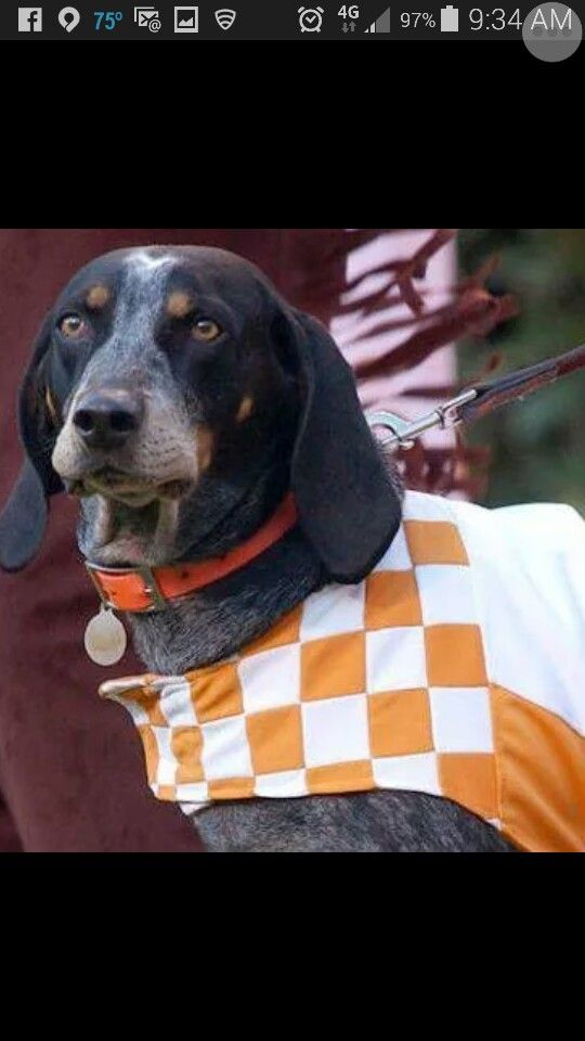 1000 Images About Tn Mascot Smokey Thru The Years On Pinterest Tennessee College Football