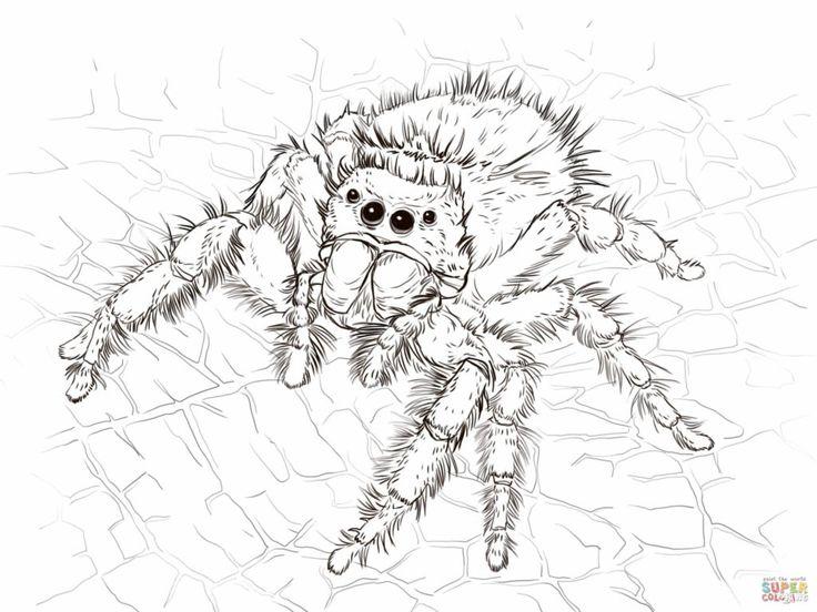 Best 20 Big spiders ideas on Pinterest