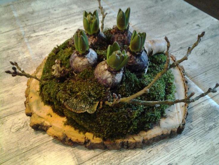 Voorjaarstukje op schijf van boomstam,  bloembollen in een bakje erop lijmen,wat oase eromheen en mos erop leggen mooie tak erbij en wat stukjes boomschors klaar!