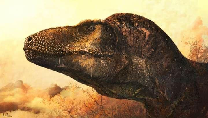 Pin De Manuel Mujica En Dinosaur En 2020 Animales Prehistoricos Dinosaurios Animales 15 animales extintos raros | ¡son increíbles! pinterest