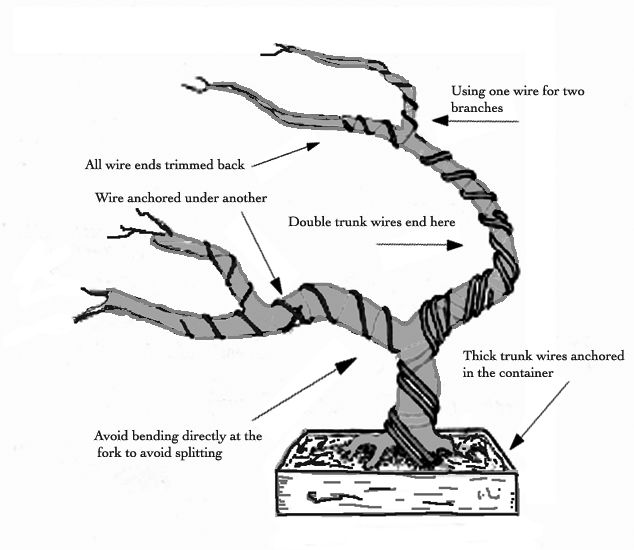 wiring bonsai tree to pot
