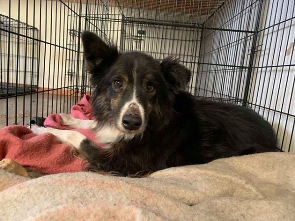 Dogs For Adoption Near Alberta Ab Petfinder The Coolest
