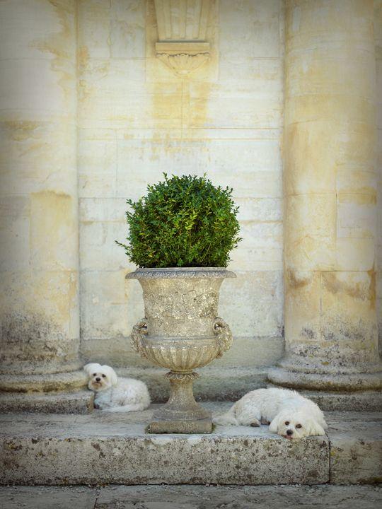 chateau du martinet, carpentras, provence.
