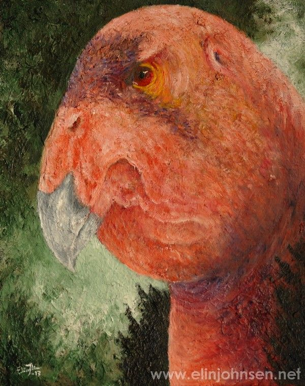 California Condor (Gymnogyps californianus). Oil on canvas 2017.