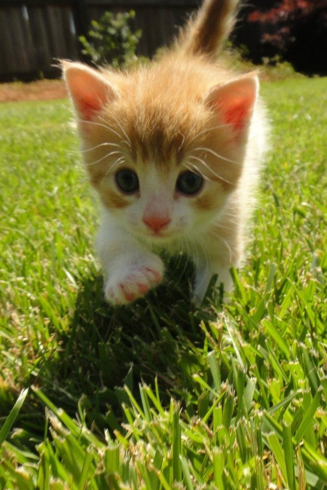 Cedric, on the prowl...