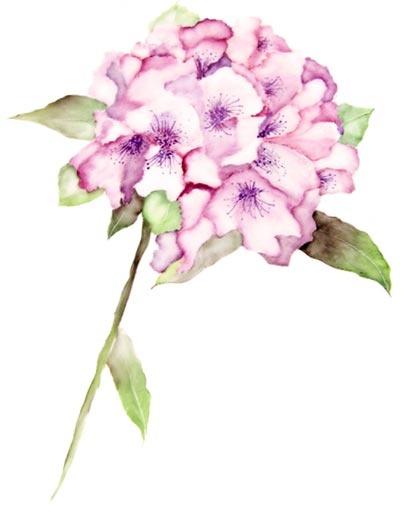 Sinfonia de flores