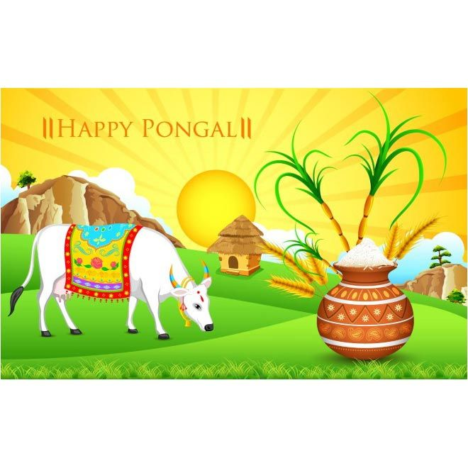 free vector happy pongal day White Cow background http://www.cgvector.com/free-vector-happy-pongal-day-white-cow-background-2/ #Agriculture, #Animal, #Animals, #Asian, #Barley, #Cane, #Card, #Cattle, #Celebration, #Clebration, #Cow, #Culture, #EarthenPot, #Editable, #Ethnic, #Family, #Farm, #Farmer, #Festival, #Food, #Fruit, #Grain, #Greeting, #Happy, #HappyPongal, #Harvest, #Hindu, #Holiday, #Illustration, #Illustrations, #India, #Indian, #Inida, #Kalash, #Kollam, #Landsca