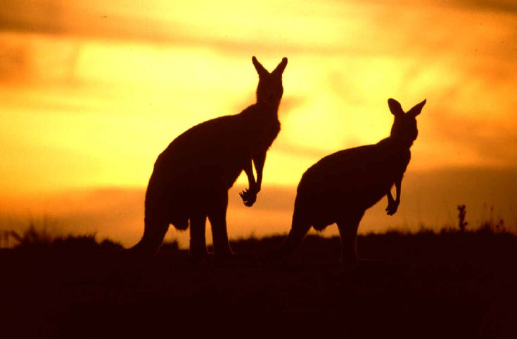 """australia   ... """"ai confini del mondo"""" l' Australia è una terra da scoprire"""