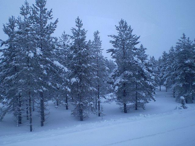 Finlandia - Kaamanen 6 by Mochileo_2008, via Flickr