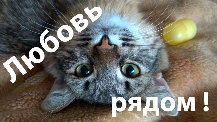 Самый лучший видео прикол про кошку. Прикольная кошка вместо любимой!