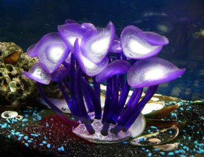Coral Reefs In The Caribbean | ... Sp. Neon Glow Coral: Azoo Neon Palythoa Sp. Glow Coral Reef Plant