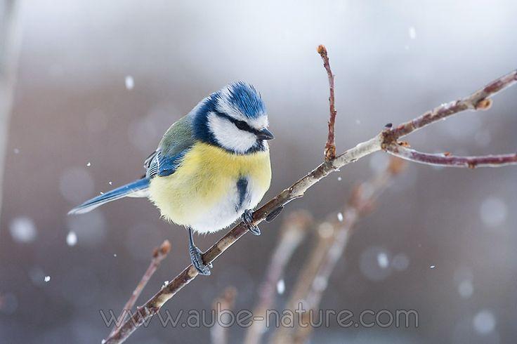 Conseils et astuces pour la photographie d'hiver