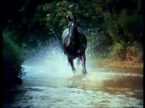 Theme from Black Beauty (Galloping Home) - Matt Mix. - YouTube