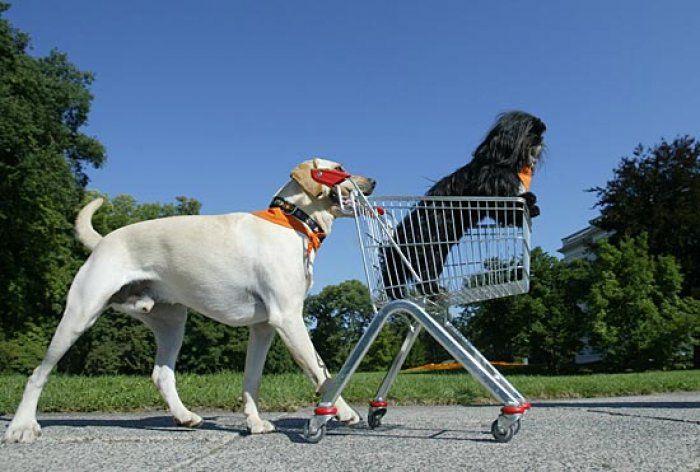 Oltremanica nasce il primo supermercato dog-friendly