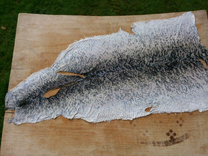 linda wåhlander: fiskgarvning