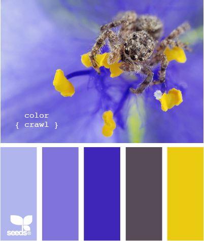 color crawl - design seeds
