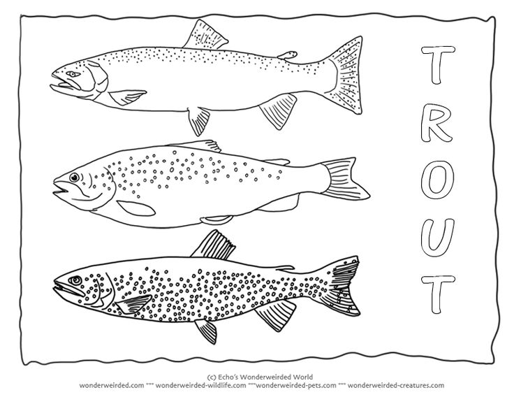 Trout Coloring Page Collectionfrom our Wonderweirded Fish
