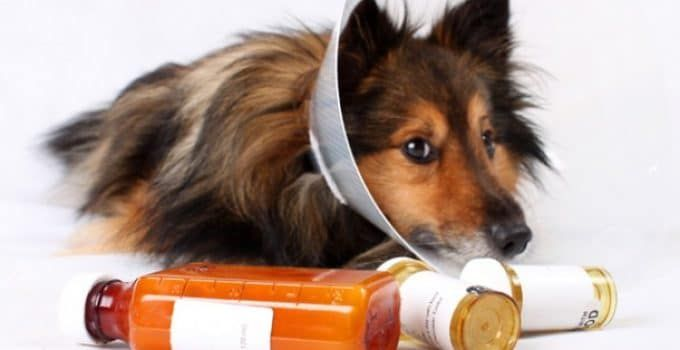 5 Best Medications For Dogs Reviews Updated 2018 Https Www Dogproductpicker Com Best Medications For Dogs Dog Puppy Pet Medications Pet Meds Pet Hacks