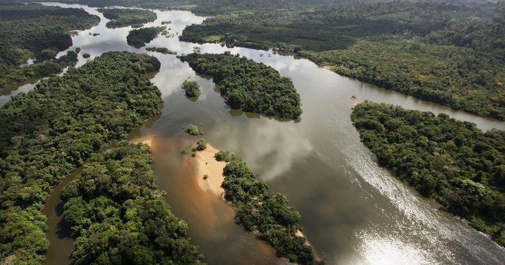 """As dez principais características da Floresta Amazônica. A Floresta Amazônica, também conhecida como Amazônia, é uma das maiores reservas naturais do planeta. Cerca de 20% de todo o oxigênio encontrado na atmosfera terrestre é produzido nesse bioma, o que explica o título """"pulmão do mundo"""". Ela é casa da mais ampla variedade de fauna e ..."""