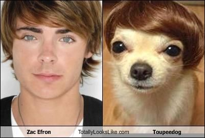 Zac Effron and his canine look-alike!
